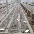 (2) Approx. 250' Nursery Stock Benches