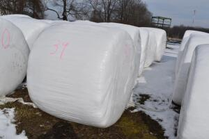 Sudan Grass Baleage- 5 Bales Per Lot, sale price includes all 5 bales- Cut Mid August 2019- Wrapped Immediately