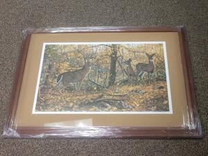 Deer Picture- Donated by David Wilson & Complimentary Framing from Wheatons
