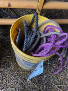 Pail of halters and leads
